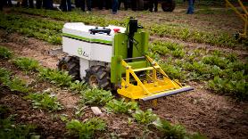 La société NAÏO TECHNOLOGIES décline Oz, son robot de désherbage